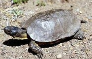 World's Best Turtle Names Map Turtle
